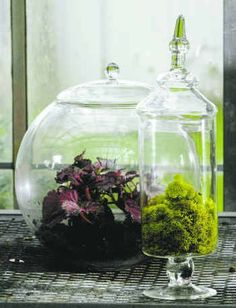 20 Ideas To Use Mini Terrariums In Interior Decorating And Table Serving | Shelterness