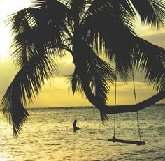 ❕ Check out this free photopalm trees swing ocean     👉 https://avopix.com/photo/21805-palm-trees-swing-ocean    #coconut #palm trees #palm #swing #ocean #avopix #free #photos #public #domain
