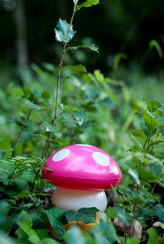 rosea fungus - seta rosa