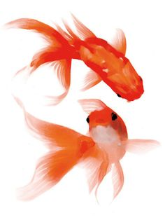 Well that's how you would do goldfish in watercolor