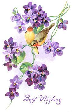 Red Throat Yellow Breast Birds on Violet Flowers Embossed Germany 1910 Postcard Vintage Cards, Vintage Images, Vintage Flowers, Vintage Floral, Watercolor Flowers, Watercolor Paintings, Ostern Wallpaper, Violet Tattoo, Sweet Violets