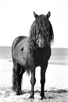 The Wild Horses of Sable Island | The collection by Dutesco