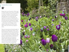 A New Gardening App for the iPad: Into Gardens