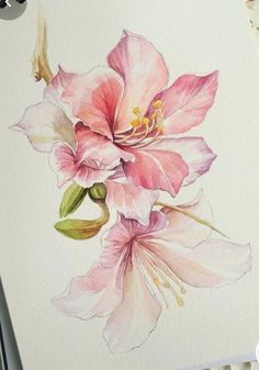 Watercolor Pictures, Watercolor Flowers, Watercolor Paintings, Watercolour, Drawing Flowers, Watercolor Painting Techniques, Plant Drawing, Art Drawings, Drawing Art