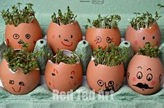 Cress Heads | This is a really cute project for the kids. #DiyReady www.diyready.com