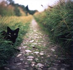 Garden path cat...prepare to be pounced!