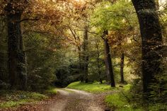 The path in the woods by agoralex. Please Like http://fb.me/go4photos and Follow @go4fotos Thank You. :-)