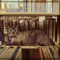 This Adorable Cat Is Being Fired From The Texas Library Where He's Worked For 6 Years #browserthelibrarycat #catsofinstagram