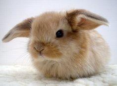 Bunny bunny <3