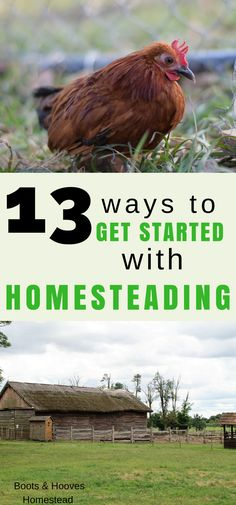 What exactly is a modern homesteader? 13 ways to get started with homesteading today. #homesteading #selfsufficient #frugal