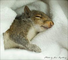 Happy, relaxed Sunday for you all, squirrel nutters! :)