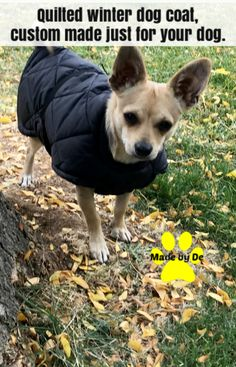 Some dogs are naturally prepared for most weather. But if you have a dog that overheats or gets cold quickly, you need to be prepared for weather changes Small Dog Coats, Small Dogs, Dog Winter Coat, Winter Quilts, Mini Dachshund, Custom Quilts, Body Heat, Warm Coat, Little Dogs
