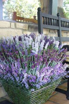I should totally grow lavender in some pots (especially different shades)