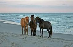 Assateague Beach! One of Maryland's best. I love it there! Wild horses roam the beach and it's a frequent site to see them running around in groups. (: