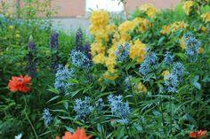 Plants, Garten, Pictures, Flora, Plant, Planting