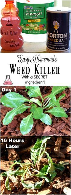 Easy homemade weed killer with secret ingredient that makes this highly effective! Chemist solution for homemade weed killer on chemistrycachet.com