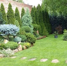 Garden Design Diy Landscaping Plants Ideas - New ideas Privacy Landscaping, Front Yard Landscaping, Arborvitae Landscaping, Garden Privacy, Back Gardens, Outdoor Gardens, Evergreen Garden, Garden Yard Ideas, Shade Garden