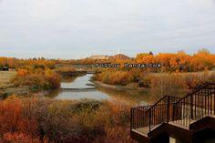 Bear Creek Reservoir in Muskoseepi Park - Grande Prairie, Alberta, Canada   FollowPanda.Com