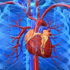 L-Arginine Plus is the L-arginine Supplement made for You. L-arginine Plus Supports Healthy Blood Pressure, Circulation, Cholesterol & Weight Loss Goals, Fast Weight Loss, Lose Weight, Water Weight, Lose 5 Pounds, Losing 10 Pounds, Healthy Blood Pressure, L Arginine, Cardiovascular Health