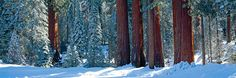 Winter by Photographer Peter Lik