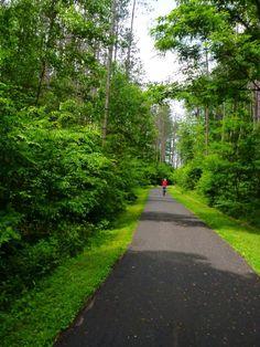 Allegany State park bicycling trail NY #PleinAirEnVR