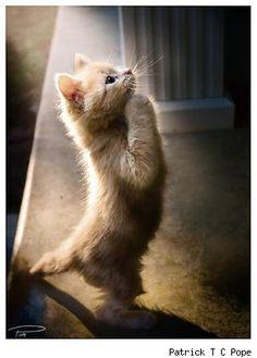 Kitty praying ,that's me a praying Kitty!!!!!! ;-)