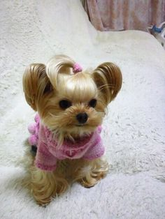 Yorkshire terriers are a little type of 'toy pet dogs' weighing a meager seven pounds as adults. Their size is because of their origins as designated vermin killers. Cute Baby Dogs, Cute Baby Animals, Cute Puppies, Dogs And Puppies, Yorkies, Yorkie Puppy, Husky Puppy, Yorshire Terrier, Teacup Puppies