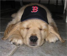 Red Sox and a puppy. Two of my favorite things. <3