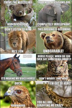 Funny animal talk