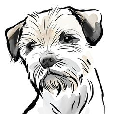 border terrier line art - - Image Search Results Border Terrier, Pitbull Terrier, Terrier Dogs, Raza Schnauzer, Scruffy Dogs, Line Art Images, Dog Silhouette, Art Graphique, Dog Tattoos