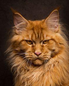 "** ""Kittens 'tink parents allz no-ing."""