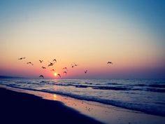 Aves volando en una playa al amanecer