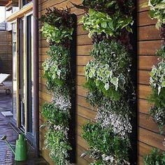 Pamba Boma: Going Green: Balcony Gardens | Balcony Gardening | Scoop.it