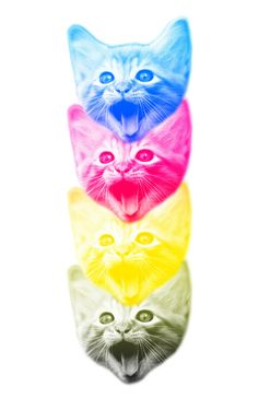 CMYKat Art Print.  I want to do this with pictures of Toulouse and Zazoo!