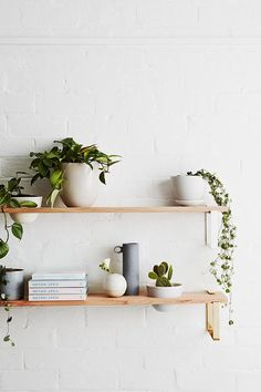 Shelf with houseplants on a white wall