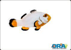 Platinum ORA Clownfish. I wish I had a pair!