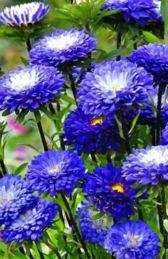 Sign in to access your Outlook, Hotmail or Live email account. Popular Flowers, All Flowers, Flowers Nature, Beautiful Flowers, Blue Garden, Dream Garden, Aster Flower, Flower Phone Wallpaper, Orchid Plants