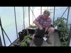 ▶ GROWING CHILLIES IN A CHILLIGROW - YouTube