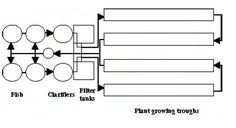 Low-tech aquaponics involve the simultaneous cultivation of an aquatic species and plants in a system.