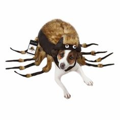 Briefly terrify your friends and family by transforming your favored pet into a life-sized tarantula with the Fuzzy Tarantula Dog Costume. Complete with realistic plush, bendable legs, and a comfortable design, this Halloween dog costume will be sure to make others scream in terror or laugh in delight.