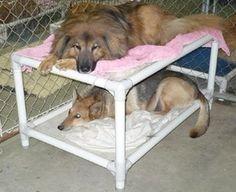 Kuranda Dog Bunk Bed Large - ALMOND (40
