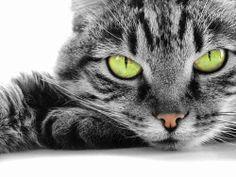 Die Katze ist das einzige vierbeinige Tier, das den Menschen eingeredet hat, er müsse es erhalten, es brauche aber nichts dafür zu tun.  -Kurt Tucholsky