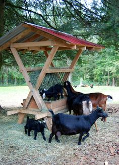 Applegarth Farm: The Spring Goat Menagerie