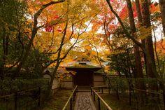 紅葉 - 高桐院 大徳寺 / Koutou-in Daitoku-ji Temple9