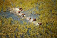 Cavalos Selvagens - imagem internet