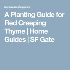 A Planting Guide for Red Creeping Thyme | Home Guides | SF Gate