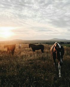 Travel Scenes: A Visit To Sunriver Resort, Oregon horses at sunset All The Pretty Horses, Beautiful Horses, Animals Beautiful, Animals And Pets, Baby Animals, Cute Animals, Wild Animals, Horse Love, Horse Girl