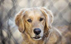 Beautiful Dog Desktop Backgrounds