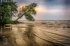 Zalew Szczeciński - Drzewo inspiracji w lipcowej odsłonie