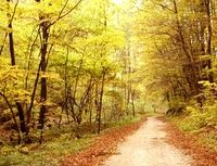 autumn Royalty Free Images, Country Roads, Autumn, Stock Photos, Fall, Copyright Free Images